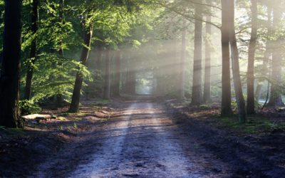 Meditace – tajemství vnitřní síly